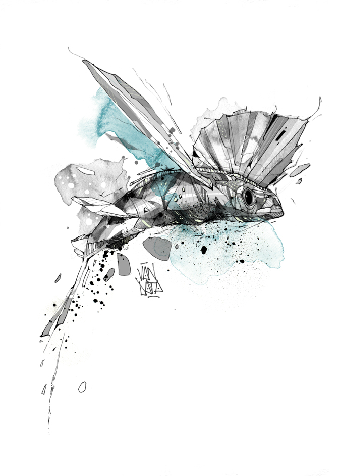 flying fish van data studio for illustration and design