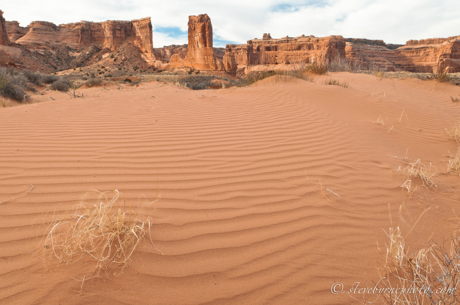 What Are the Primary Consumers of the Southwest American Desert ...